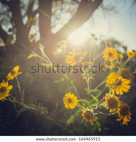 Flowers in the Sun - stock photo