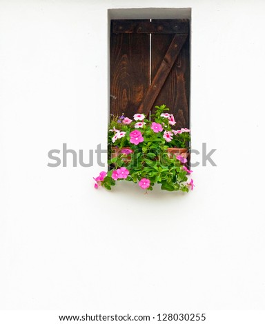 Flowers in the window - stock photo