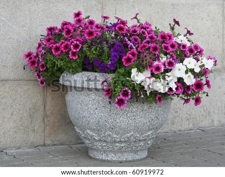 flowers in vase - stock photo