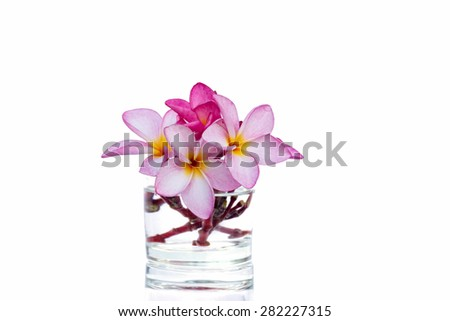 flowers in vase isolated on white background - stock photo
