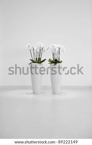 Flowers in vase, minimalistic decoration - stock photo