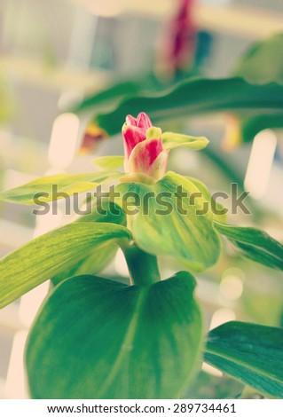 flowers - instagram filter effect - stock photo
