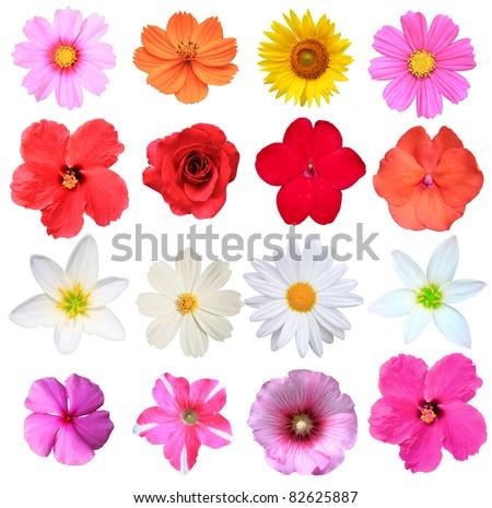Flowers isolated on white stock photo - stock photo
