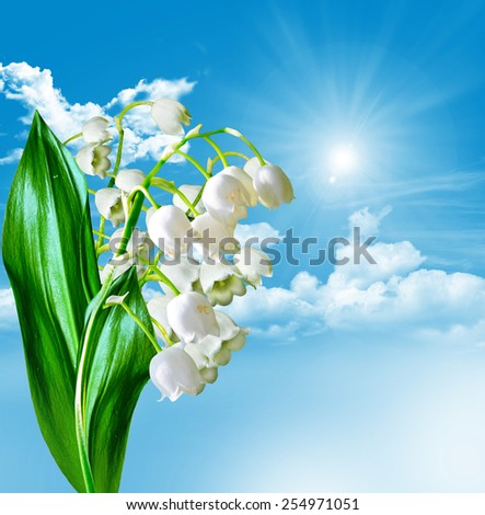 Flowers lily of the valley and blue sky with clouds - stock photo