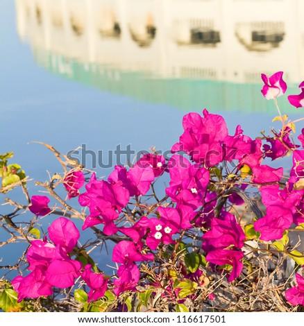 flowers near swimming pool - stock photo