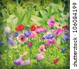 flowers of Anemone on field - stock photo