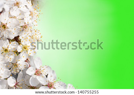 flowers of apple trees on a green background