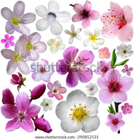Flowers of blooming garden - stock photo