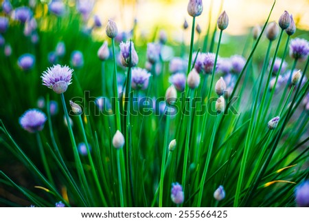 Flowers Of Decorative Purple Bow, Green Natural Background - stock photo