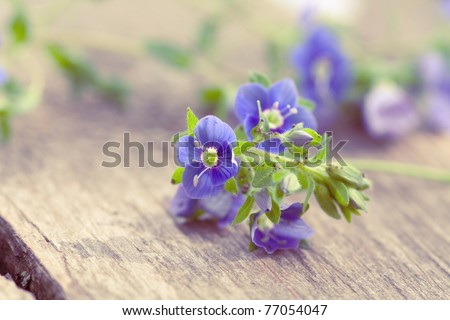 Flowers of forget-me-not on wooden background - stock photo
