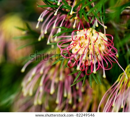 Native Australian Plants And Trees Australian Native Plant in