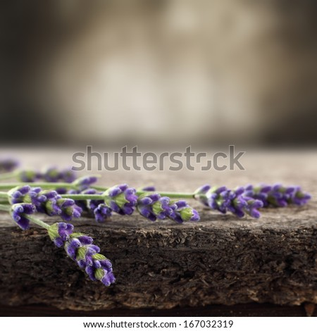flowers of lavender  - stock photo