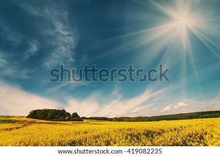 flowers of oil in rapeseed field with blue sky and clouds.natural floral background. vintage picture - stock photo