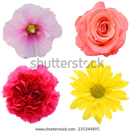 Flowers of summer blooms collection - stock photo