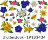Flowers of the alps - jpeg version. - stock vector