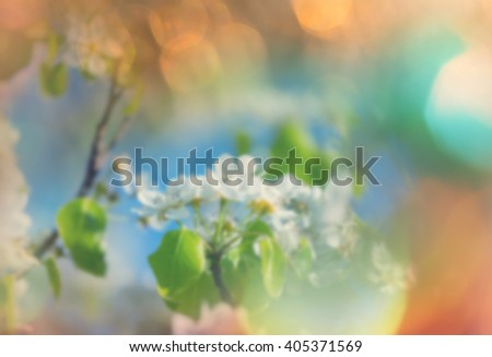 Flowers of the cherry blossoming in the spring garden - stock photo