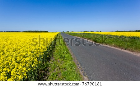 Flowers of the oilseed rapeseed plant recede into the distance beside country lane - stock photo