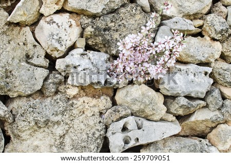 flowers on a stone wall - stock photo
