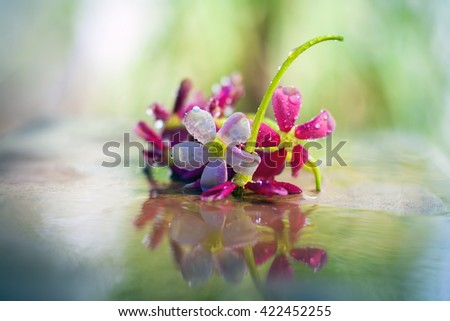 """flowers on a wet shinning surface,with dark black background, isolated, selective focus, shallow depth of field, concept of love and loneliness"""" - stock photo"""
