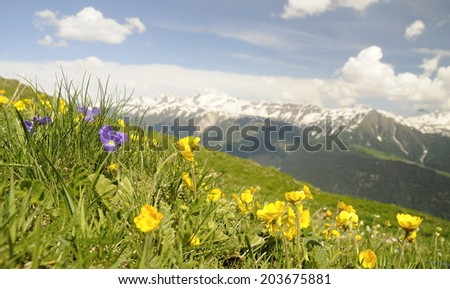 flowers on an alpine meadow with mountains in the background and clouds on a blue sky - stock photo