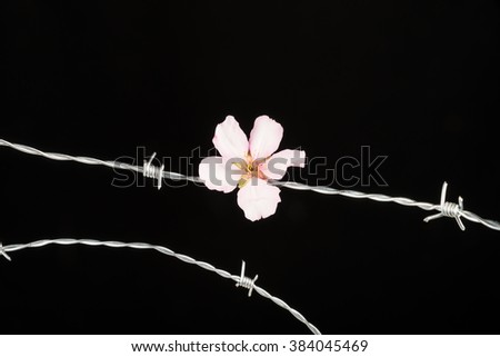 Flowers  on barbed wire, a concept on immigration and refugees - stock photo