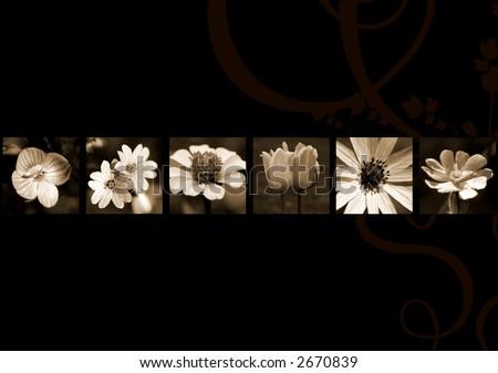 Flowers on black, sepia - stock photo