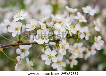 Flowers on branch - stock photo