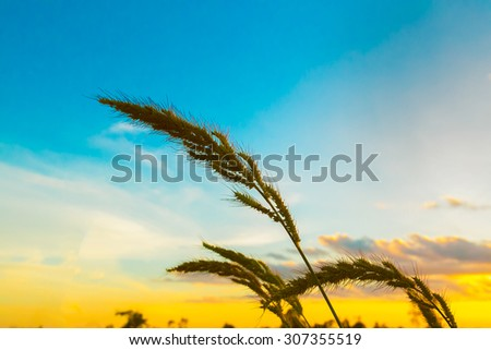 flowers on bright sunny day. - stock photo