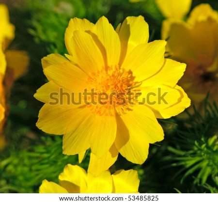 flowers on colorful background - macro photo
