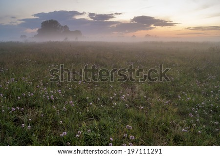 flowers on foggy meadow - stock photo