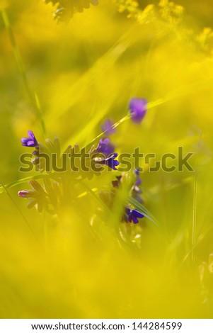 flowers on meadow - stock photo