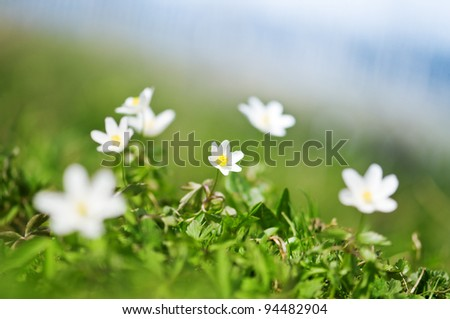 flowers on spring forest closeup - stock photo