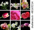 flowers on the black background collage - stock photo