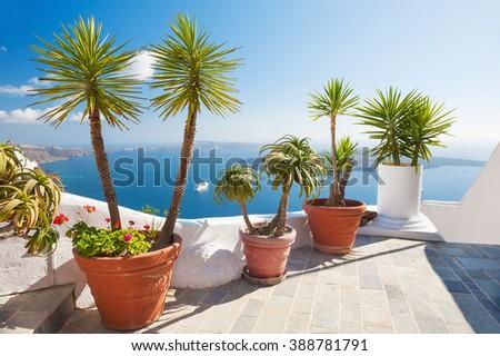 Flowers on the terrace. Beautiful landscape with sea view. Santorini island, Greece.  - stock photo