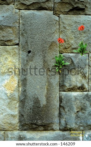 Flowers on the Wall - stock photo