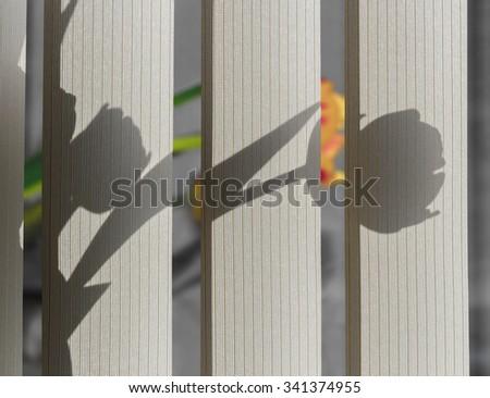Flowers on the windowsill - stock photo