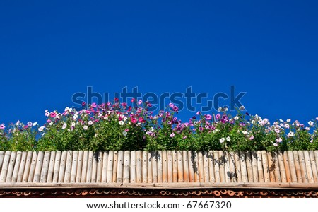 Flowers over bamboo fence and blue sky - stock photo