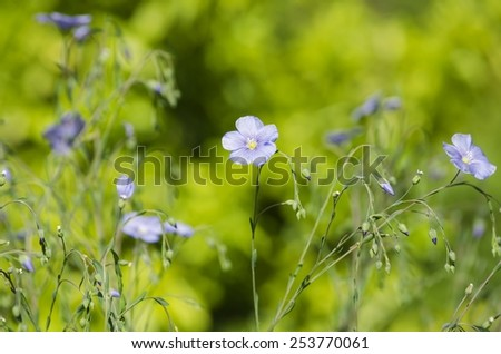 Flowers Over Natural Background in Summertime - stock photo