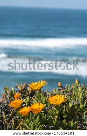 Flowers overlooking Ocean - stock photo