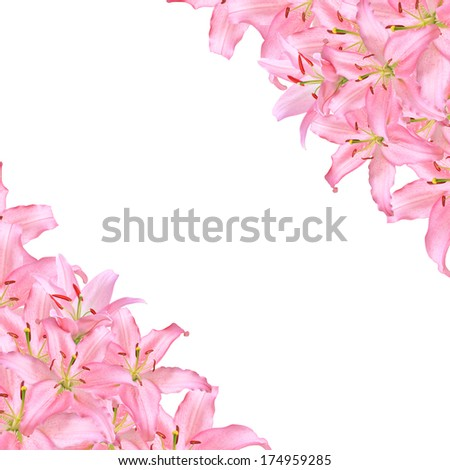 Flowers,Pink Lilies Isolated on white background ,flower  frame