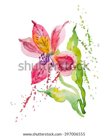 Flowers pink, red alstromeries, watercolor - stock photo