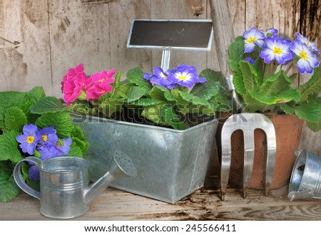 flowers pot ans gardening accessories on wooden background - stock photo
