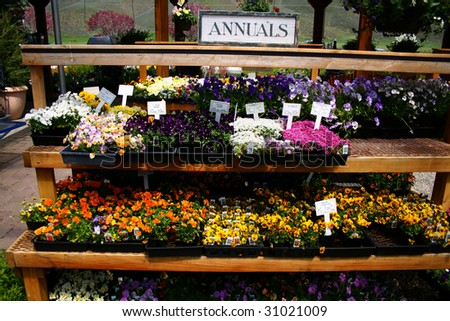 Flowers ready to buy and plant in Idaho - stock photo