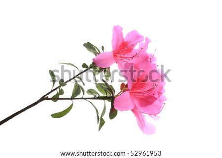 flowers reflected on white background
