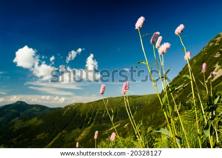 Flowers such as jewelry mountain - stock photo