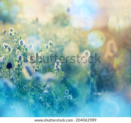 Flowers summer meadow - stock photo