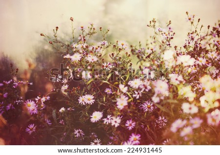 Flowers summer meadow, tinted photo - stock photo