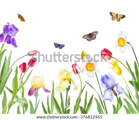 Flowers tulips, irises, daffodils on white background - stock photo