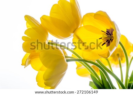 flowers tulips yellow bouquet isolated on white background - stock photo