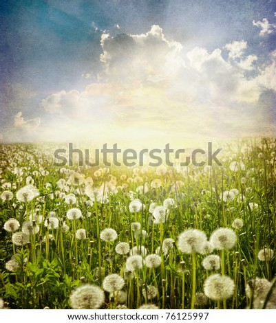 Flowers view in perspective in a green field - stock photo